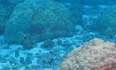 water-temp-samoa