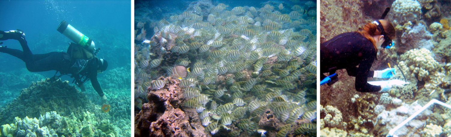 Reef Surveys