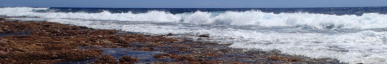 header-wave-kalo