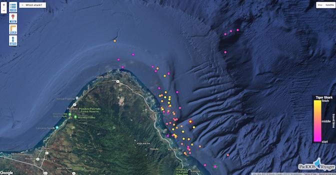 news-new tiger shark tracks